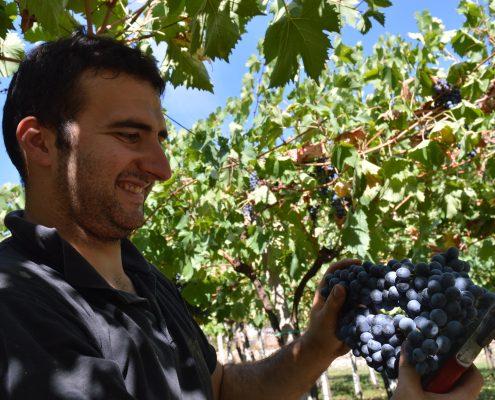 La raccolta delle uve del Botticino